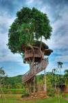 casa albero 1.jpg